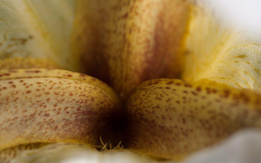 Intimate Albino Nazareth Iris