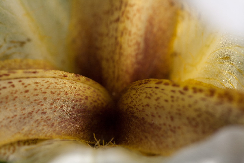 Nazareth iris exposed; Albino