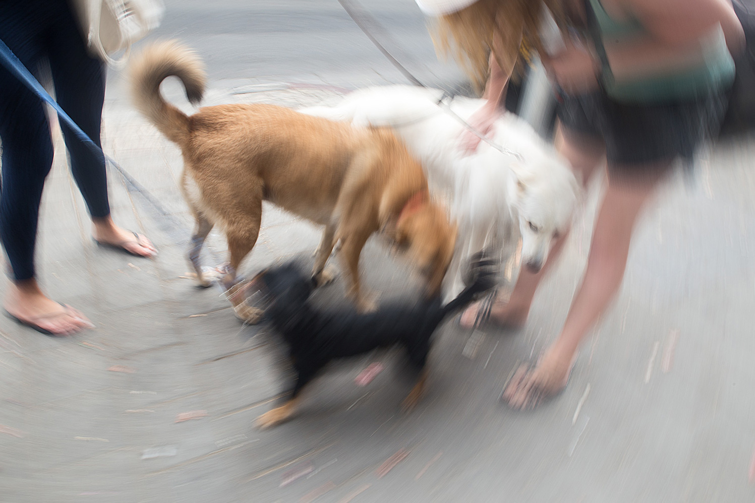Dogs in Florentin. Tel Aviv