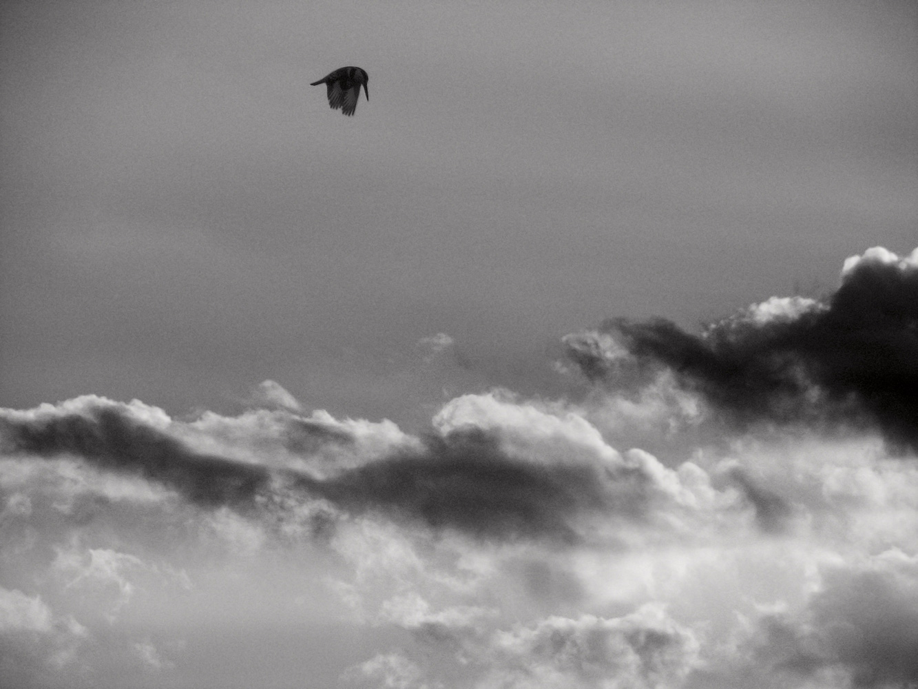 Pied Kingfisher above the clouds