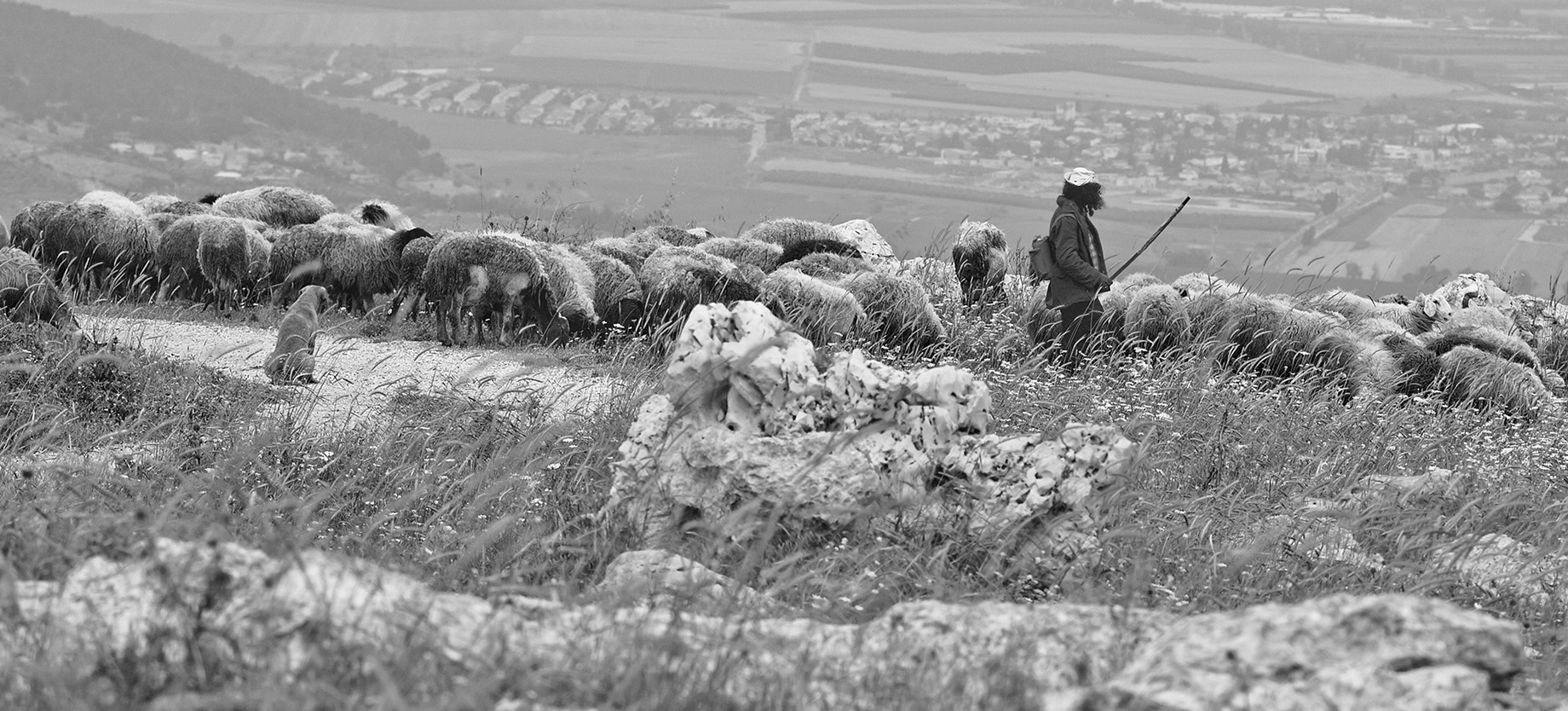 Shepherds, a Man and a Dog