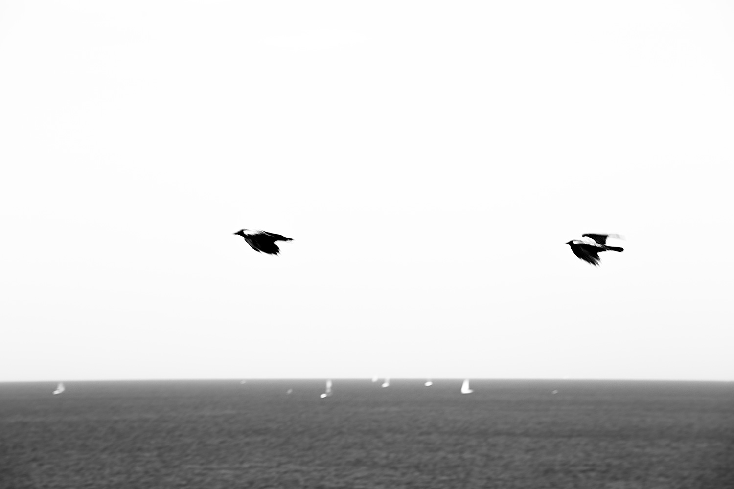 Two Crows over Seven Sailboats