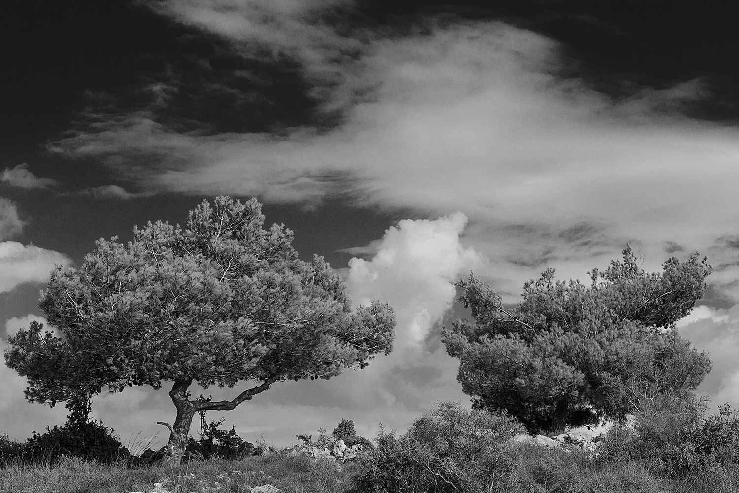 Two Pine Trees and Clouds