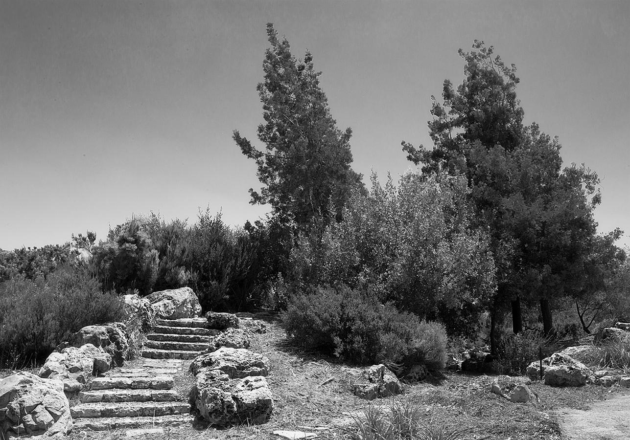 > Botanical Garden, The Hebrew University, Jerusalem