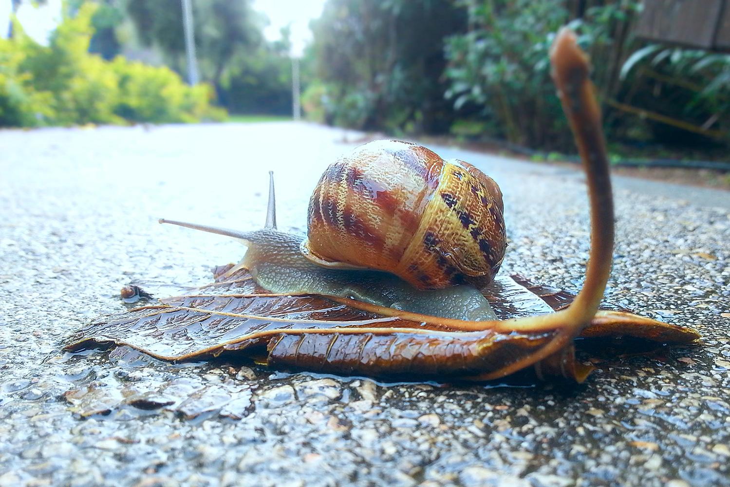 A Snail on a Rainy Day